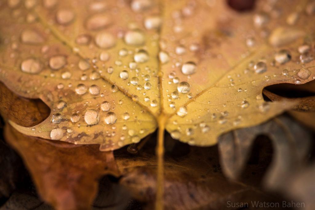 SusanWatsonBahen_Serentiy_November-5349