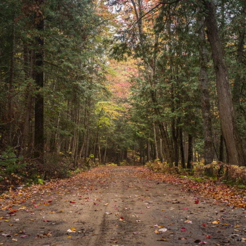 ottawa-fine-art-photographer-susan-watson-bahen-serenity-blog-october-country-road-in-forest-fall-colours