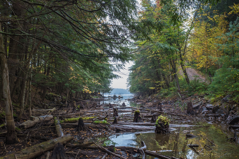 Landscape image of a lake inlet with moss covered tree trunks by Ottawa Fine Art Photographer, Susan Watson Bahen.